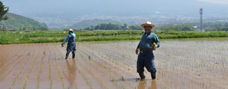 生産者・農産物情報
