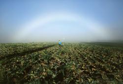 第17回JA佐久浅間フォトコンテスト<br />最優秀賞作品 「朝霧の中で」